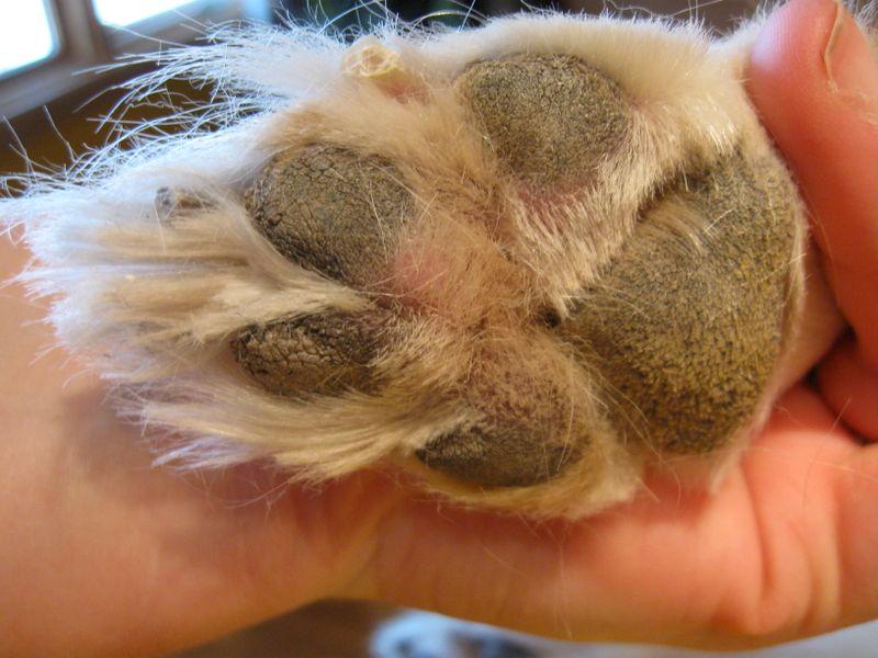 Very dry paw