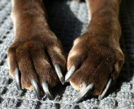 Dogpaws
