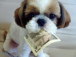 Dog:momey