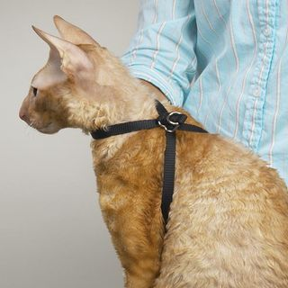 Top Performance Cat Grooming Harness | PetEdge.com