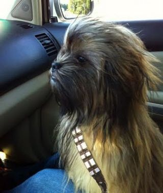 Star Wars Chewbacca Dog