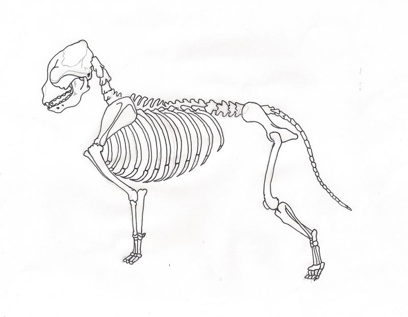 Newfie Skeleton0001