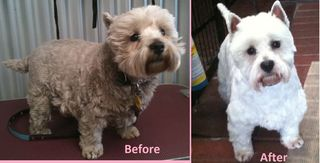 Fergus Before and After