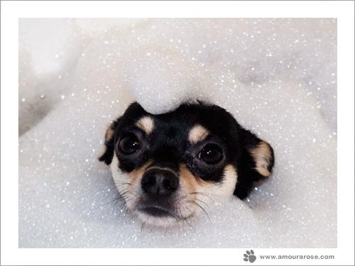 Chih bath