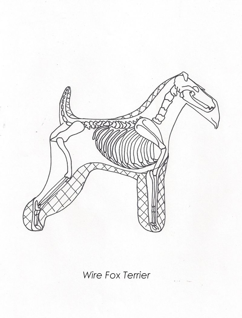 Long legged terrier0001