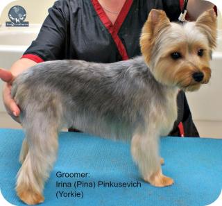 Puppy cut 3