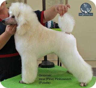 Puppy cut 2