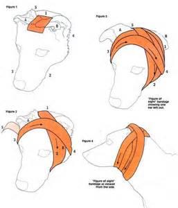 Ear wrap chart