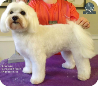 Puppy cut 1