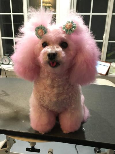 Hairofthedog-pink-2-400