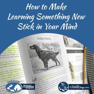 Blog-LearningStick-1080-1024x1024